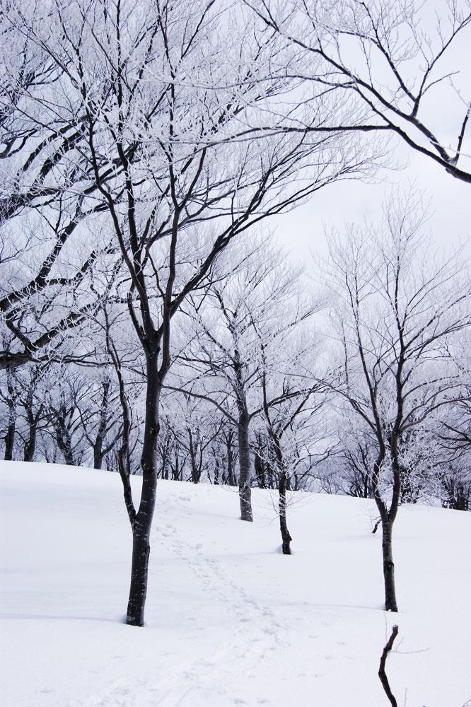 20110403_makihatayama01