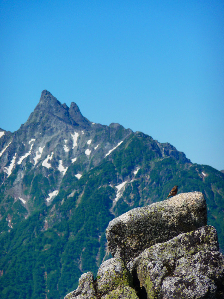 20110717_tsubakuro27
