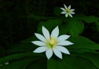 20120716_shiroumadake001