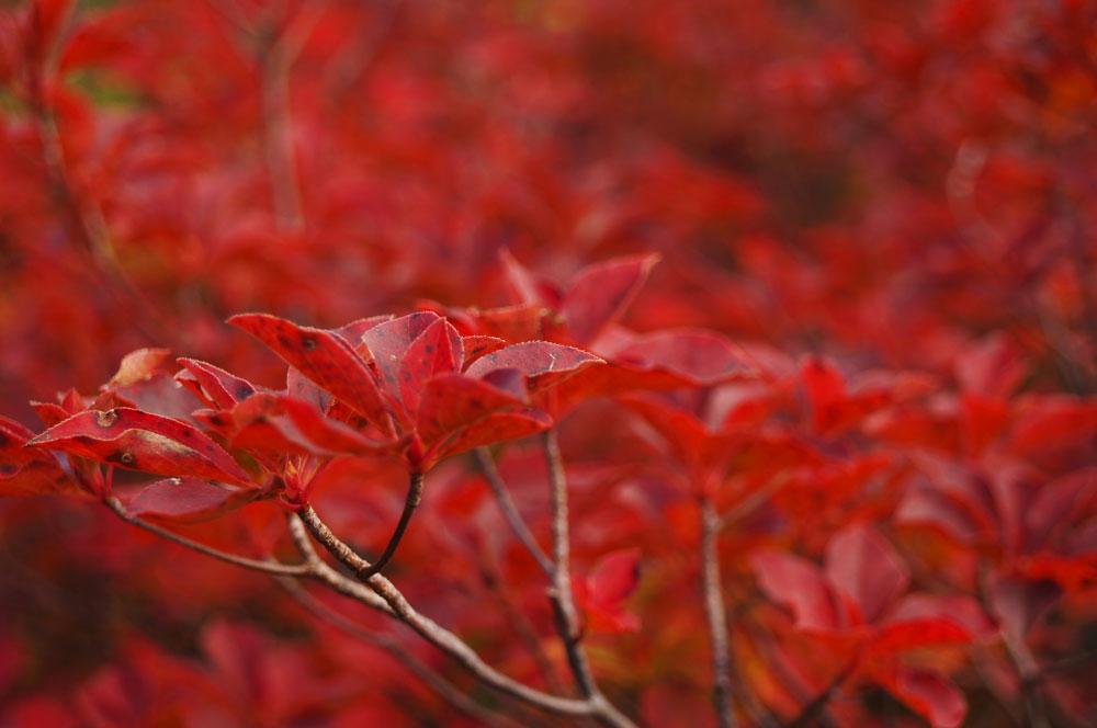 20140921_hiragatake005
