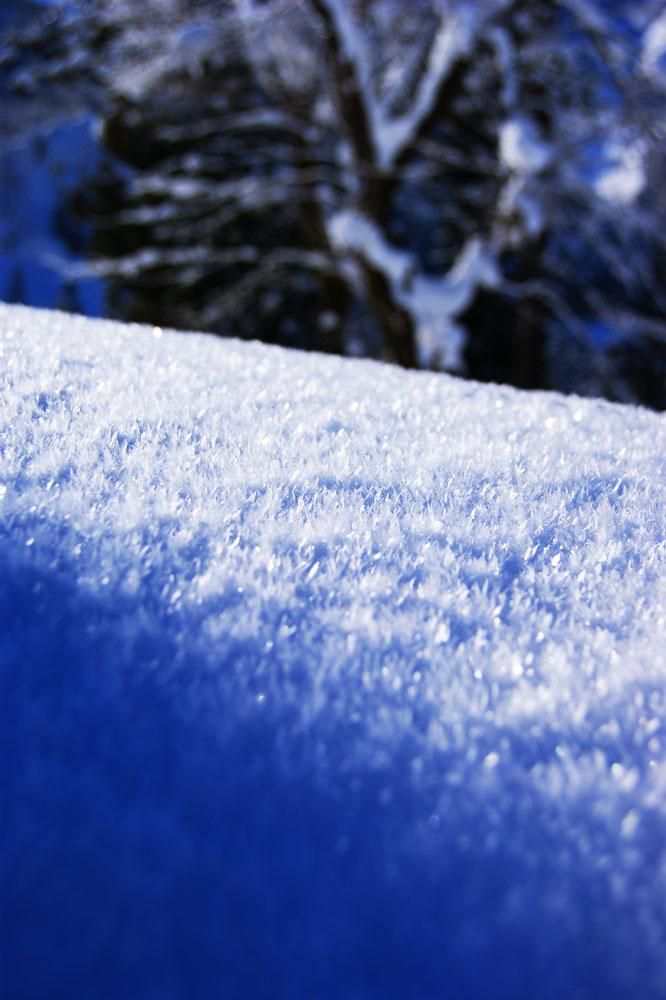 20110216_snow-img001