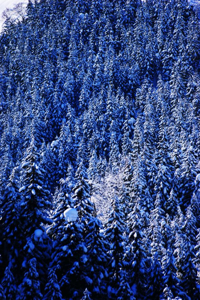20110216_snow-img003