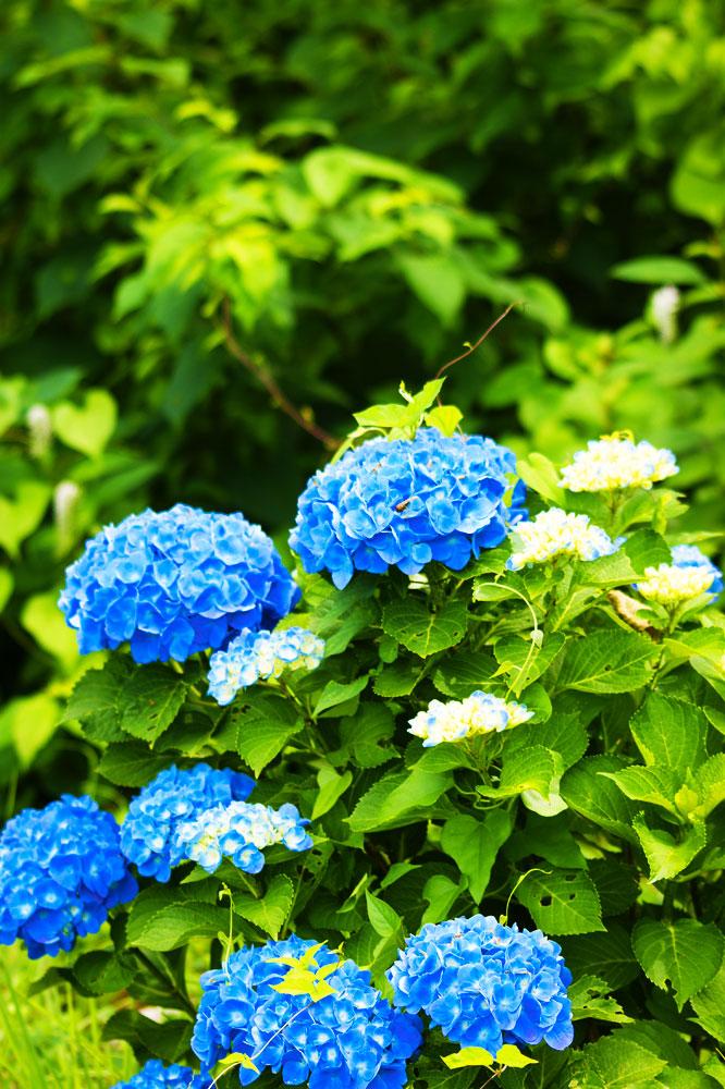 20110710_hujigongen07