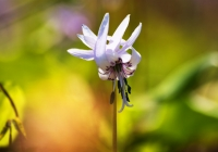 20110515_springfllower008