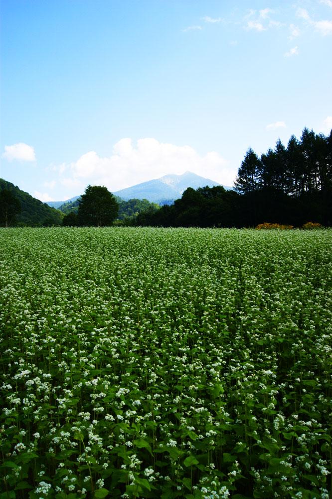 20100822_oze&hiuchigatake023