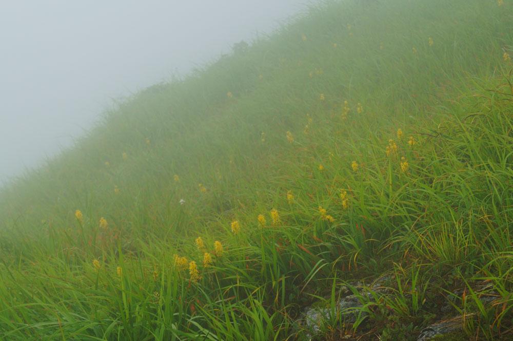 20130810_echigokoma001