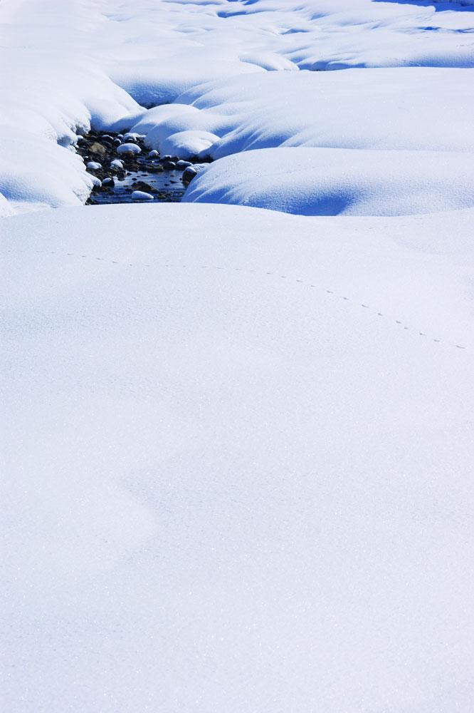 20110216_snow-img008