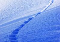 20110216_snow-img004